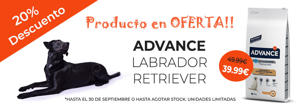 oferta advance labrador retriever